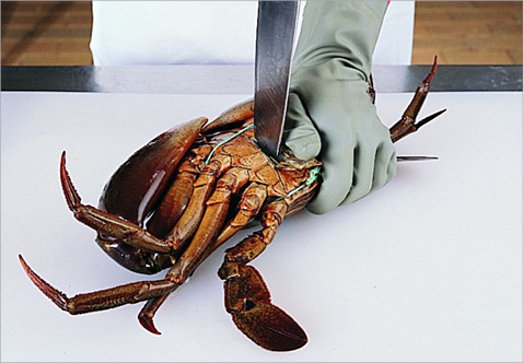 A sedated, live crab is flat on its back on a cutting board. A person's left hand is holding the body while the right hand is piercing with a large kitchen knife vertically through the abdomen near the tail.