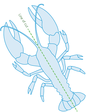A top-view diagram of a lobster on its back showing the line of cut as a straight line from tail to head along the centre line of the animal's body.