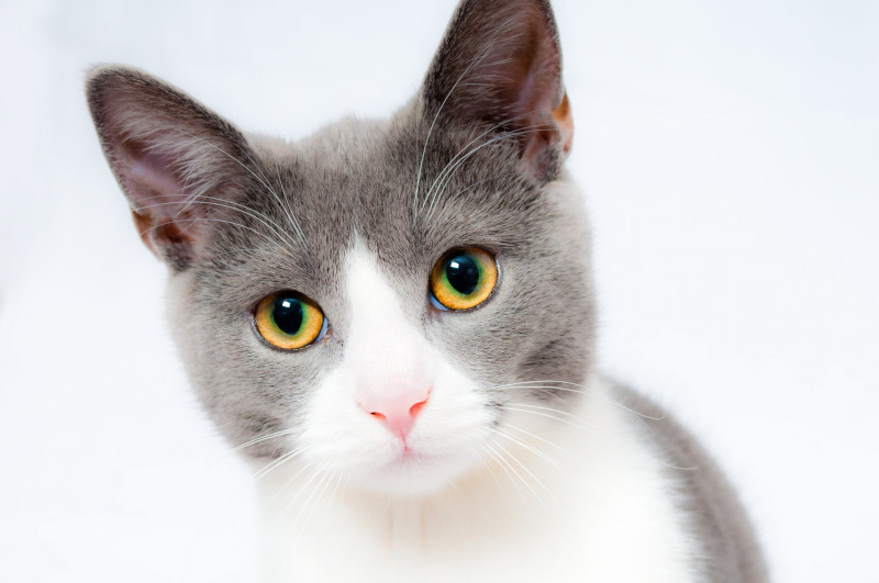 Is Microchipping Mandatory For Cats And Dogs Rspca Knowledgebase
