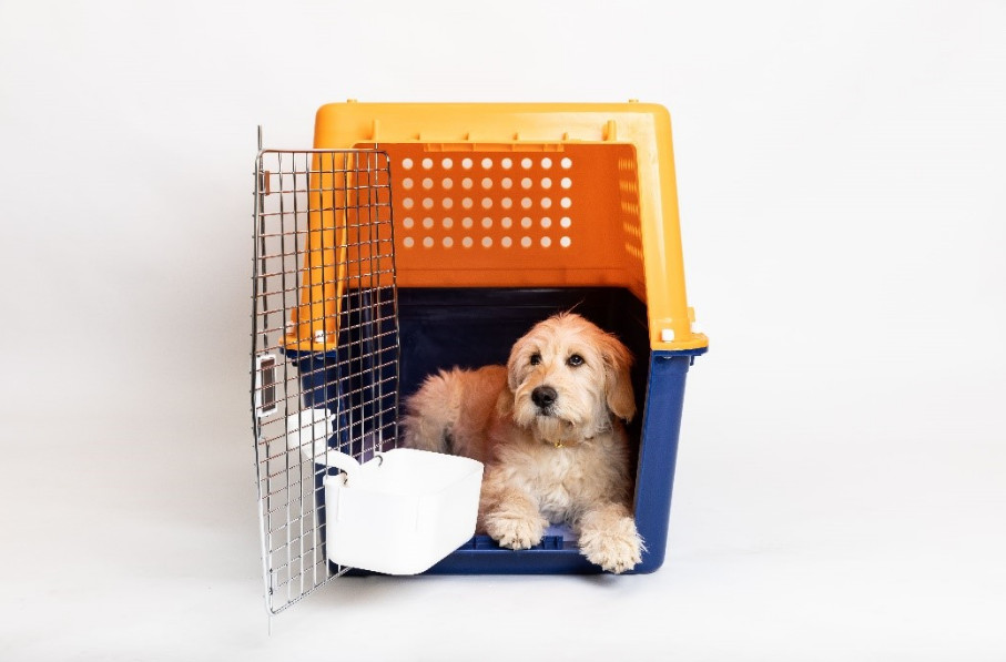 Dog air travel container