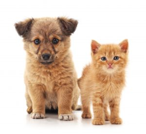 Are there laws that require companion animal breeders to