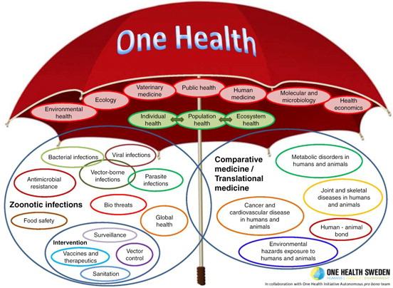 One Health Diagram
