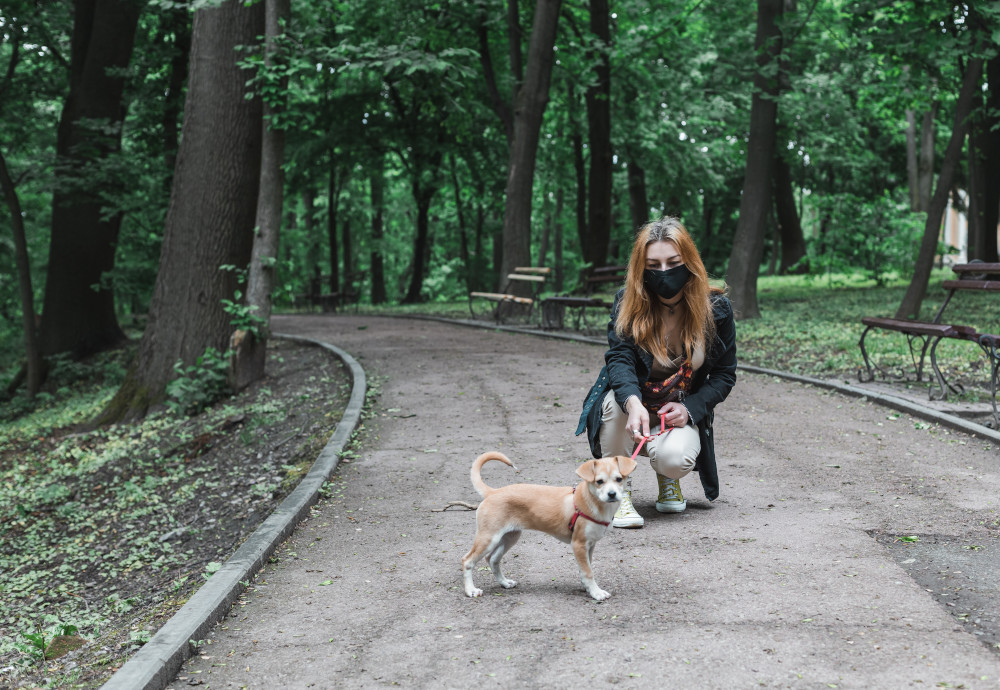 Walking Dog in Park with Mask