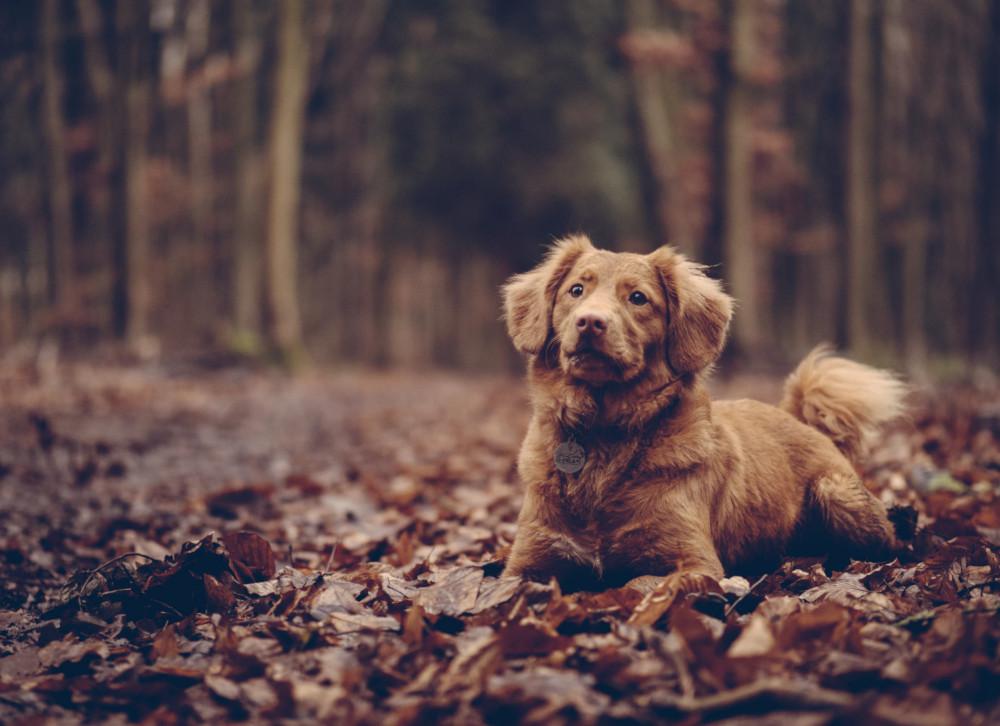dog-leaves-forest